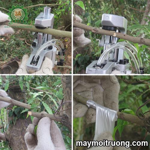 Thao tác ghép cành cây